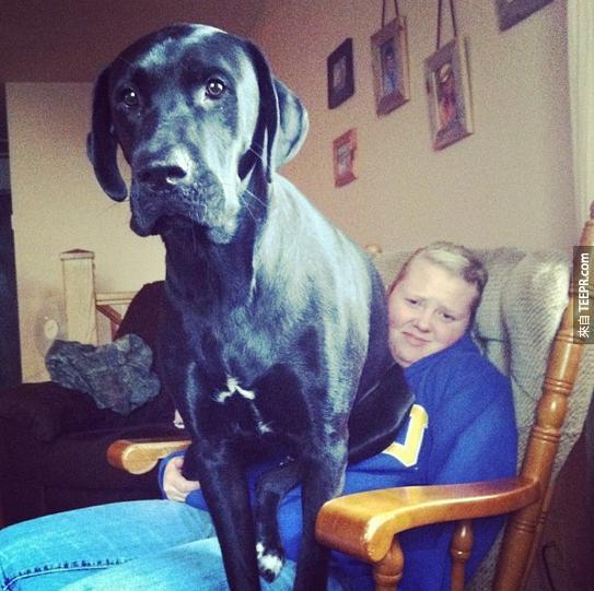 當大狗不知道他們其實很大隻的時候,這就是爆笑的結果。