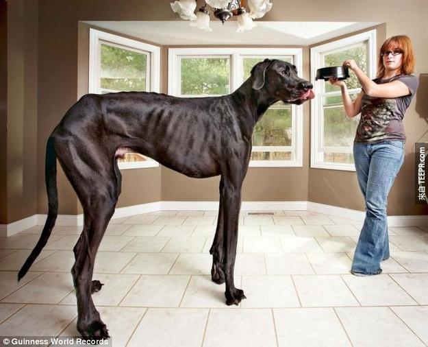 22. 天啊...是狗太大,還是他的主人是哈比人?