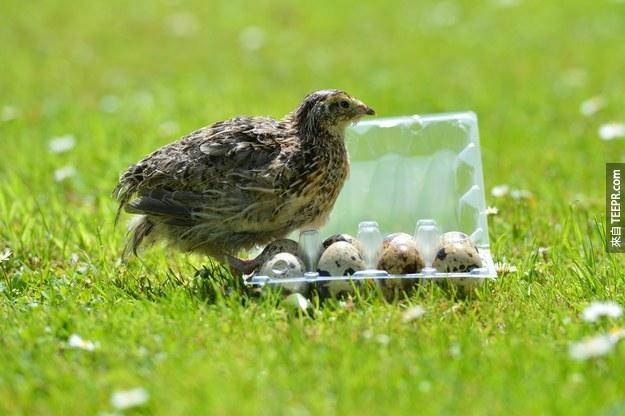 這名太太在超市買了一些蛋。她做夢都沒有想到接下來發生的事情。