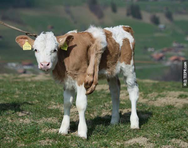 這22個驚奇的動物會讓你不敢相信自己的眼睛。#15根本就是神話中的小神獸。