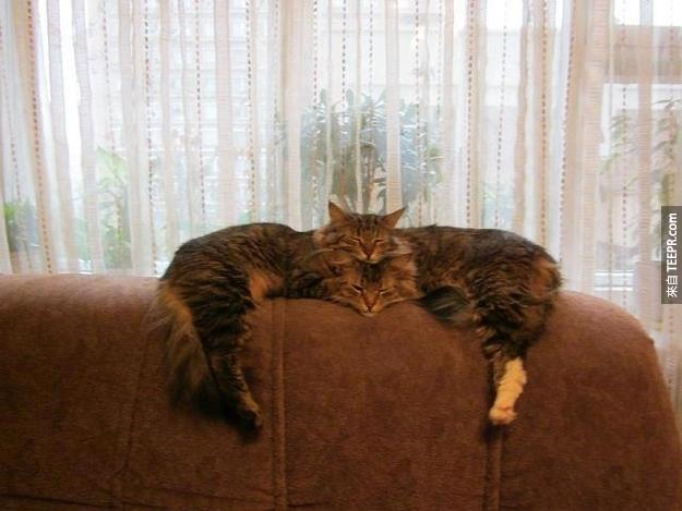 一隻還是兩隻貓?