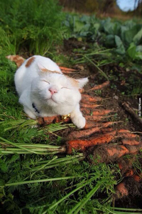 最近好多人都在討論這隻貓。等你看了這些照片後,就會知道為什麼了。