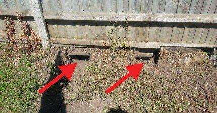 他在後院的木柵欄下找到了兩個小洞。當他回頭看後院的時候嘴巴裡的飯都吐出來了。