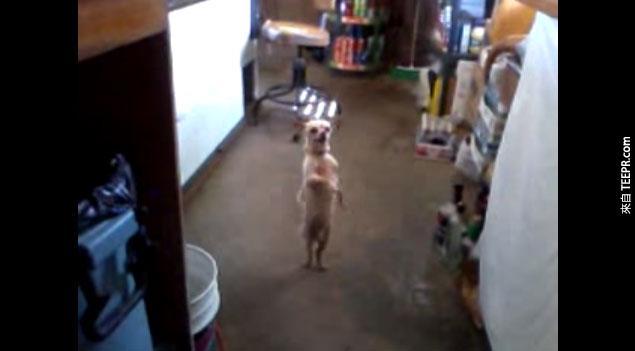 這隻狗狗做的事情讓我不敢相信我的眼睛。我終於可以說 我什麼都見識過了!