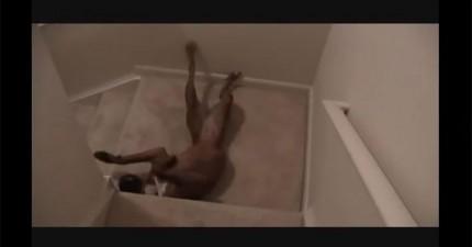 這隻狗狗發明了一套最棒的下樓梯方法...笑死我了!