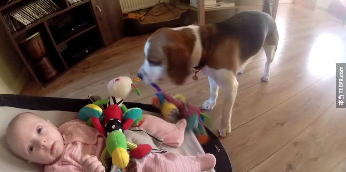 狗狗把小baby的玩具搶走後比現出歉意
