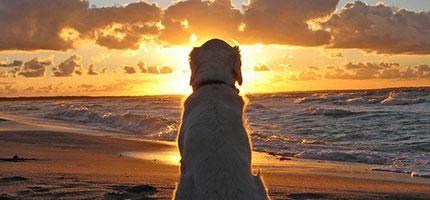 狗狗永遠都不會死。這個人的解釋已經讓整個網路淚流成河了...
