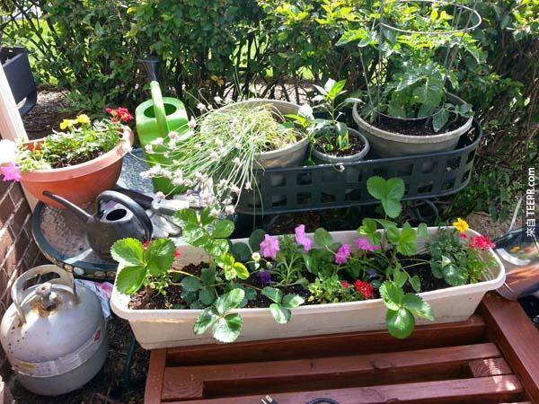 他用盆栽裝飾他的小庭園。
