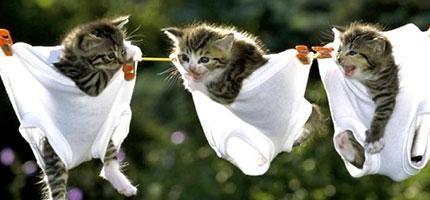 28個原因為什麼每個人都應該要養貓。是科學證明的喔!