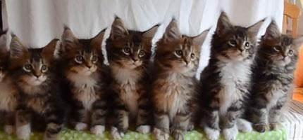 不管你有多鐵石心腸,你的心還是會被這7隻小貓的表演融化掉。