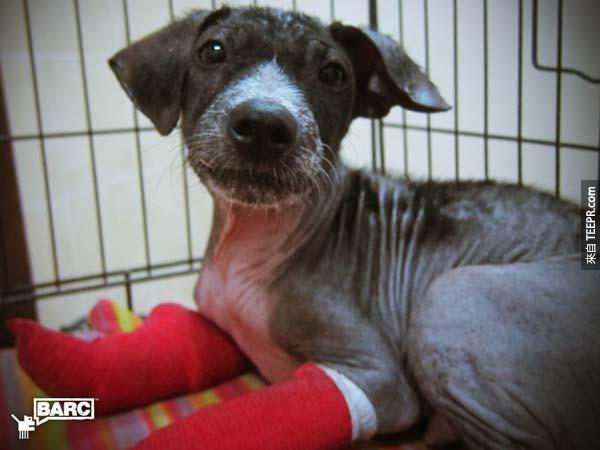 所有路人看到這隻小狗的時候應該都覺得他沒救了,但是你一定要看看他後來的180度大轉變。