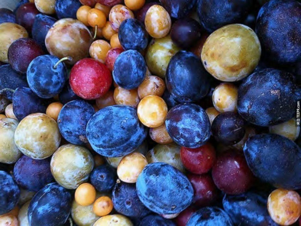 這就是同一棵樹生長出來的水果 (李子類和杏子類)。