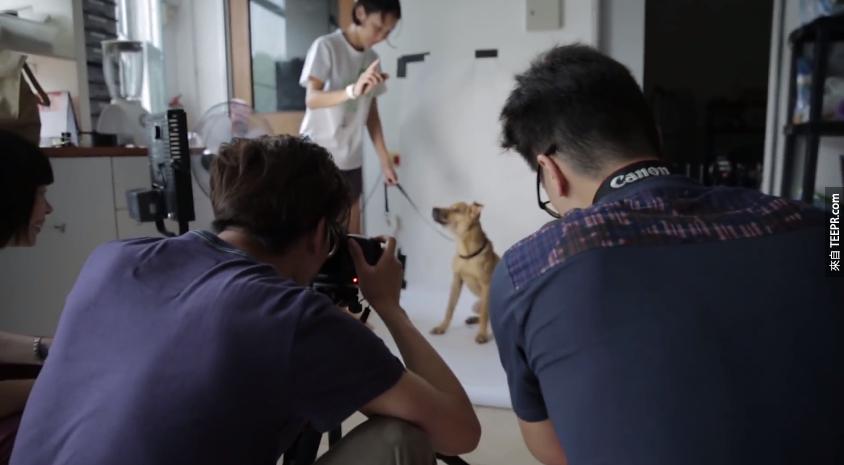 首先,流浪貓與流浪狗必須先拍張照片。