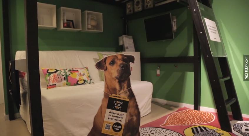 IKEA-Pet-Adoption
