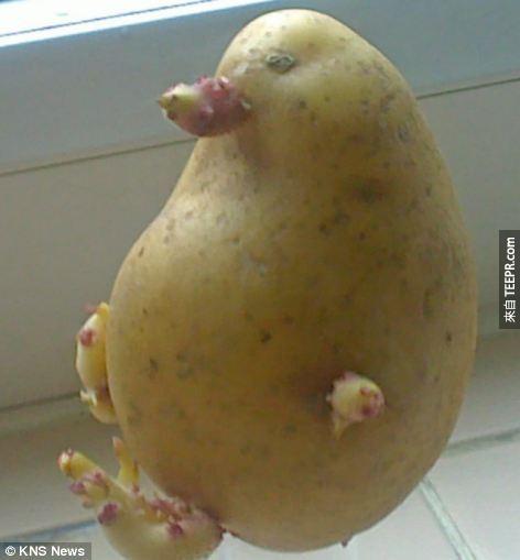 23. 企鵝馬鈴薯