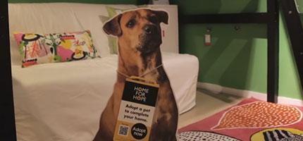 IKEA想到了一個幫助流浪狗找到新家的最好的方法。這個方法天才到讓我好感動。