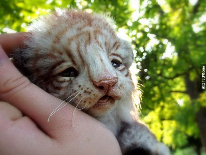 如果你想要養寵物但是又怕累的話,你一定要看看這些超可愛的「動物」。