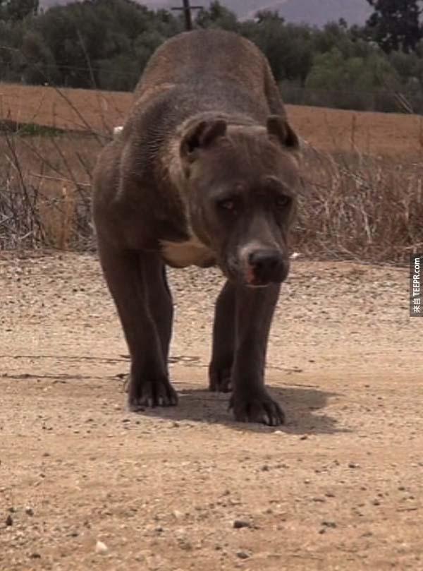25隻流浪狗的拯救前後的照片。我沒有想到差別會這麼大!