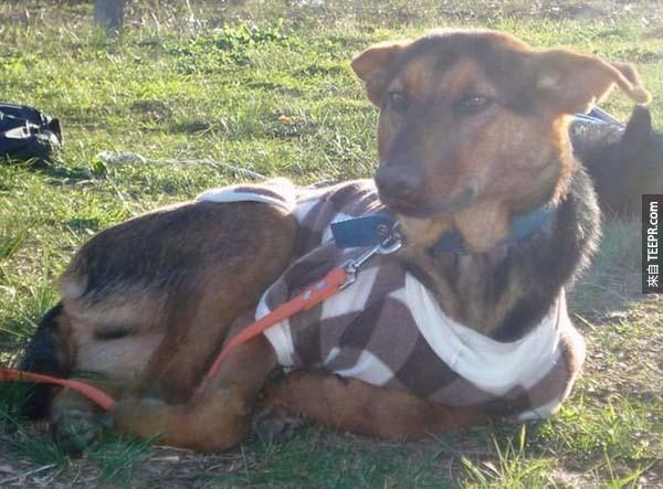 rescue dogs28