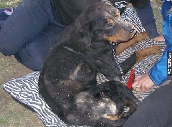 rescue dogs31