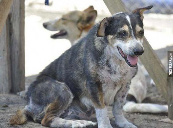 rescue dogs43