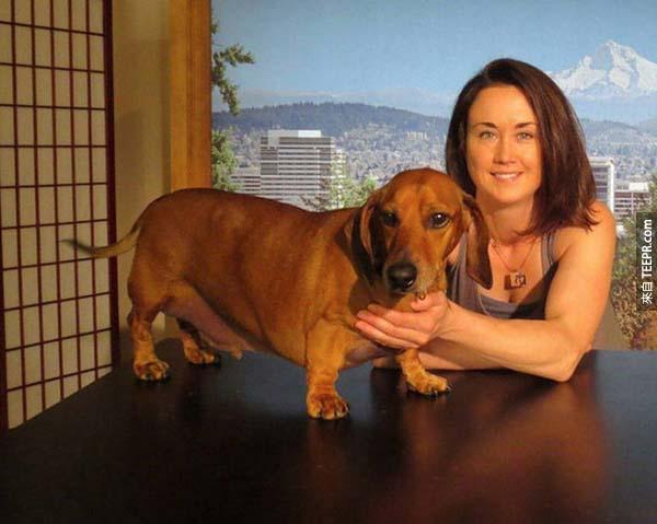 rescue dogs45