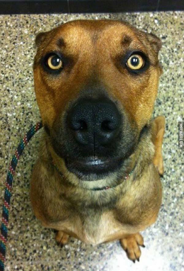 rescue dogs47
