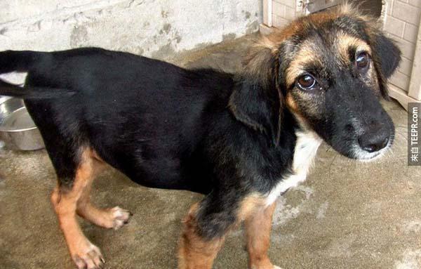 rescue dogs6