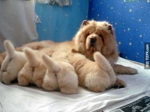 我不知道怎麼跟你開口...但是這24個超可愛的狗狗小屁股會改變你的一生。