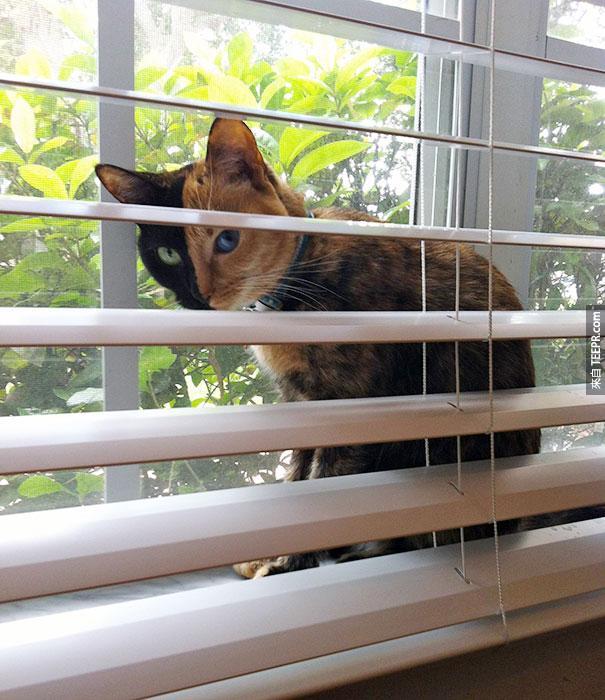 她就是全世界其中最知名的貓咪。你只要看到她的臉就知道為什麼了。