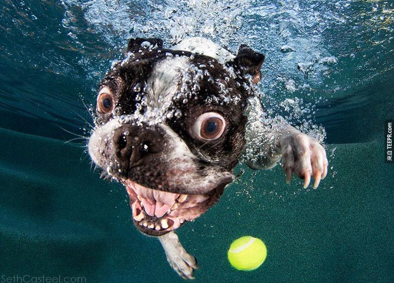 當狗狗跳到水裡撿球的時候,他們露出的表情會是你今天最大的驚喜。