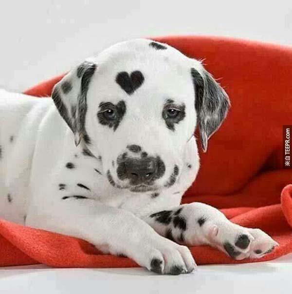 這19隻狗狗絕對跟你以往看過的不一樣,但還是會把你的心融化掉!