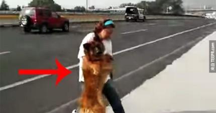 看到受傷狗狗被困在路中央,這位墨西哥女子冒險做了這件事情。