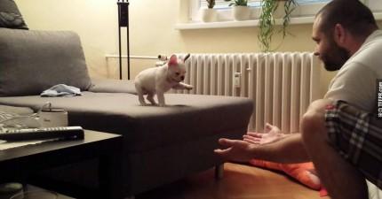 不知道為什麼,但是這支小法鬥犬跟主人玩的超可愛影片讓我看了好幾遍!(還有小驚喜喔)