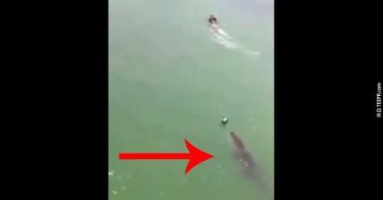 這名遊客在墨西哥遇到的事情可能會讓你以後再也不敢去游泳了。