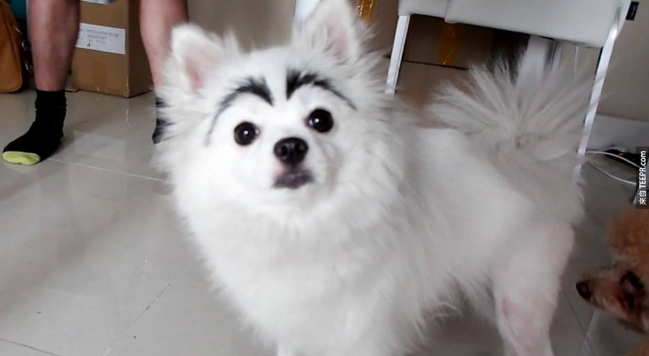 這些有眉毛的狗狗心裡在想什麼,你一眼就可以看出來了。