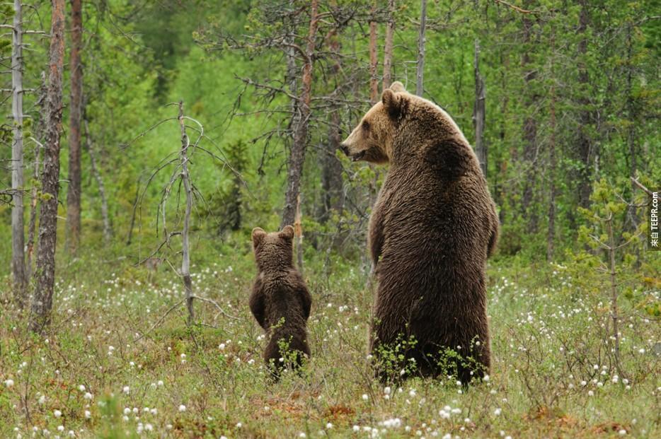 這28頭熊居然以為自己是人。他們不知道自己多麼爆笑!