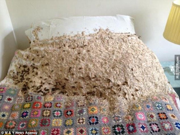 男子打開了家裡很久沒用的房間,發現了裡頭有5,000隻...
