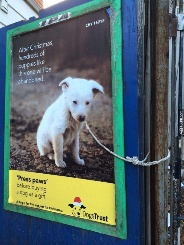 29. 在聖誕節後,跟這隻一樣的上百隻小狗就會被丟掉:在你買狗狗當禮物之前,停一停。