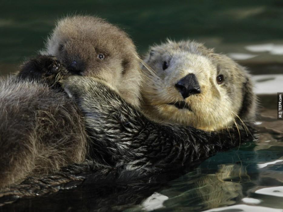 這些動物父母跟他們的迷你版合照真的可愛到讓人受不了!