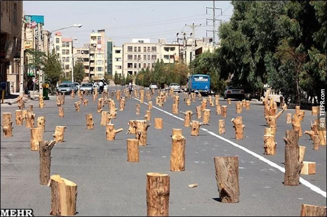 在伊朗擁抱大樹