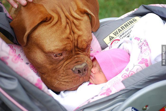 22個原因為什麼你應該讓孩子跟大狗一起長大。