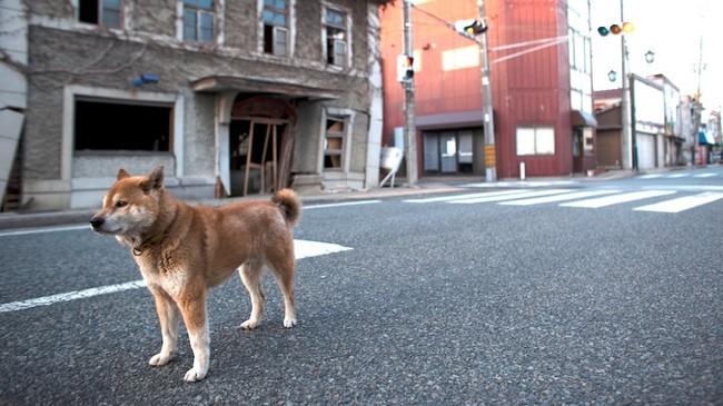 8.)福島,日本