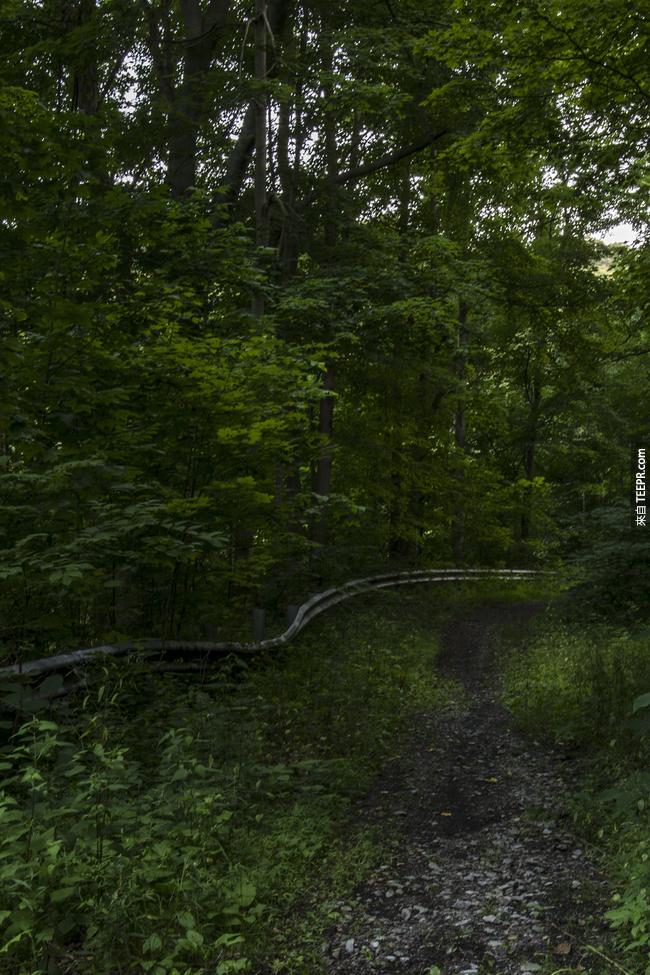 賓夕法尼亞的鄉村道路也被大自然接管了。