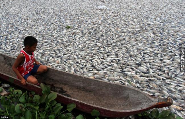5)質量魚類死亡 - 印尼