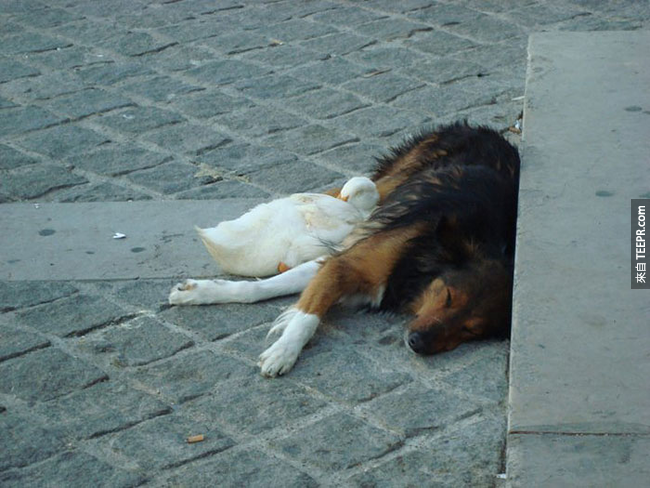 Meaning of course these forever pals have a serious obsession with nap time around Paris.