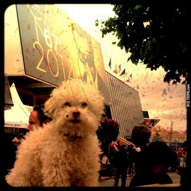 這隻狗狗有可能已經完成了你的夢想。你一定要看看他去過的地方!