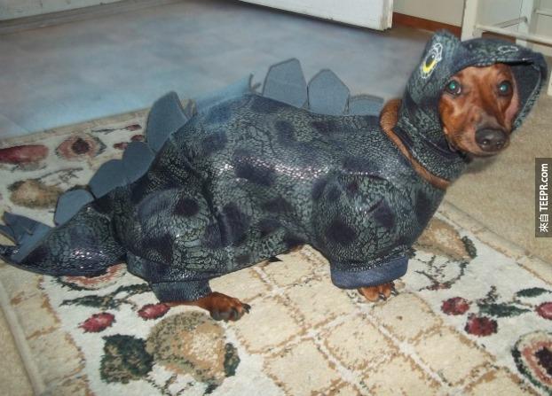 8. 臘腸狗是美國最熱門的品種之一。