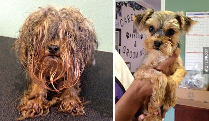 16隻流浪狗被拯救之前和之後的照片。