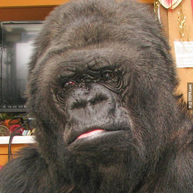 """""""Koko was quiet and looked very thoughtful,"""" a spokesperson for the Gorilla Foundation said in a press release emailed in response to an inquiry from BuzzFeed."""